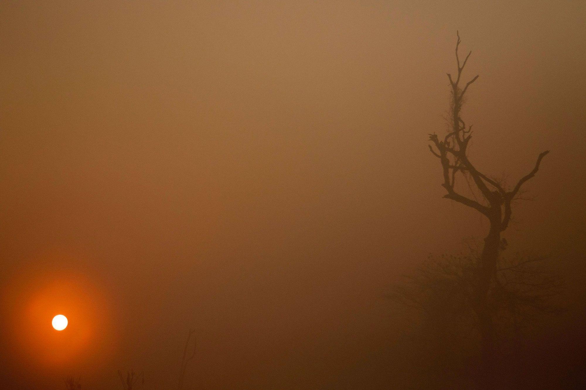 Incendies En Amazonie Un Moteur De Recherche Ecolo Bat Des