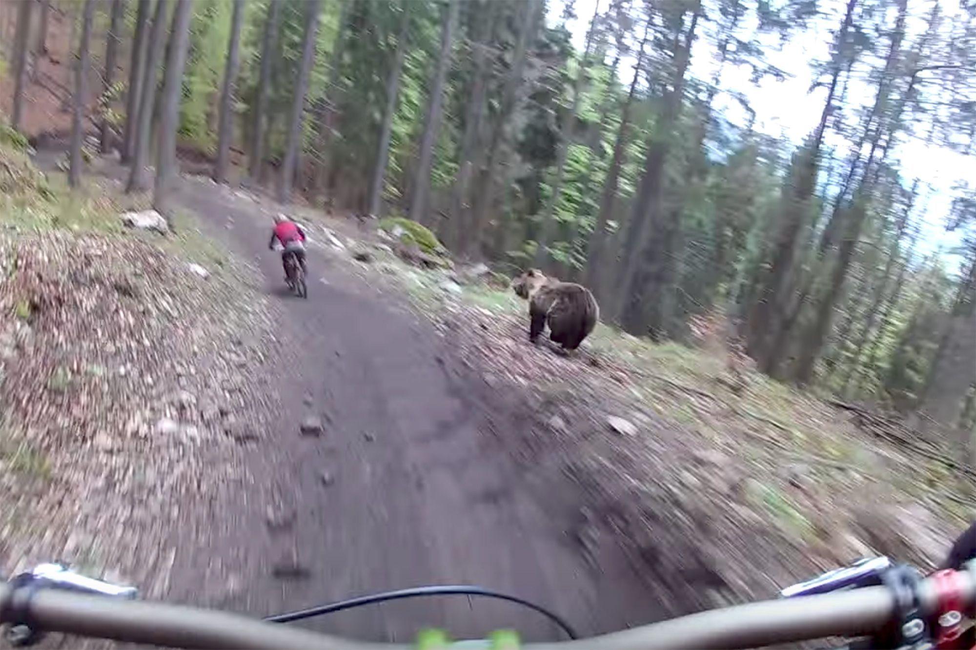 """Résultat de recherche d'images pour """"vélo ours"""""""