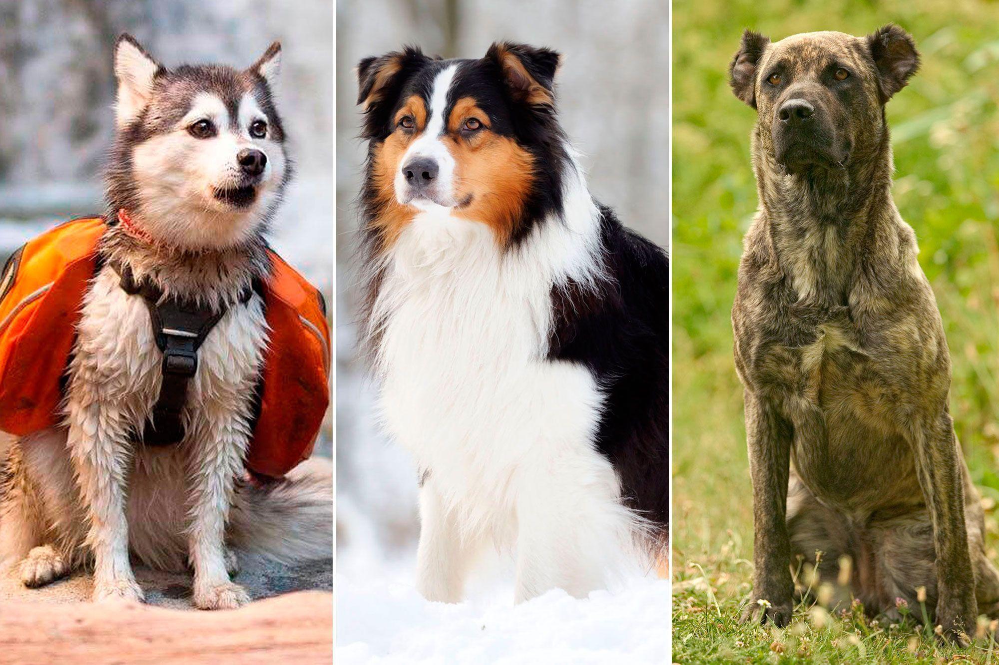 Canape Chien Maison Du Monde les 50 plus beaux chiens du monde en photos