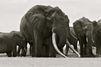 Satao, l'éléphant victime de la cruauté des hommes
