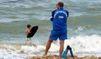 Les physalies, peur sur les plages