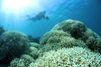 """""""Cela va changer pour toujours la Grande barrière de corail"""""""