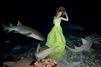 Danse avec les requins