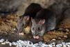 A Marseille, une école maternelle fermée pour cause de rats