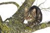 Des dizaines de chats maltraités ou décapités découverts dans un squat