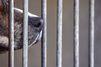 Rhône : 53 chiens maltraités retrouvés dans une maison