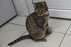 Saint-Pierre-la-Mer : plus de 200 chats victimes d'un tueur en série