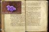 Un nouvel antibiotique dans un manuscrit médiéval