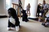 Dognapping évité à la Maison-Blanche