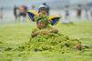 Une plage chinoise recouverte d'algues