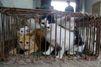 L'abattoir de l'horreur en Chine