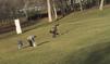 Quand un aigle attaque un enfant à Montréal