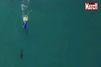 Requins contre surfeurs