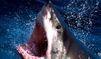 Seychelles. Alerte au requin tueur !