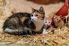 130 chats sauvés dans un appartement à Paris