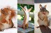 15 écureuils dynamiques repérés sur Pinterest