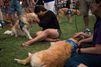 A Orlando, des chiens pour consoler après l'attentat