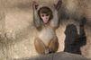 Au zoo de Yantai, les macaques sont stars