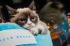 Grumpy Cat fait de sa maîtresse une multi-millionnaire