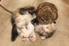 L'amitié improbable du jeune hibou et du chaton