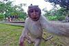 Le selfie du singe