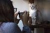 Les chats stars du café