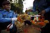 Les chiens policiers mis à l'honneur