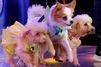 Les chiens stars d'un défilé