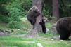 Les oursons apprentis grimpeurs