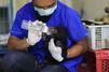 Victime d'un trafic, l'ourson malais a été sauvé