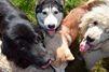Trois chiens ouvrent un robinet et créent une inondation