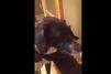 Tendres retrouvailles entre chat et chien