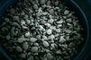 771 bébés tortues saisies à la douane