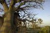 Au Sénégal. Quand l'ecotourisme s'éveille.