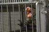 Le martyre des animaux de laboratoire : l'enquête