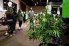 4.000 pieds de cannabis découverts dans un entrepôt à Hem