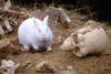 """""""Un lapin fantôme gros comme un mouton"""""""