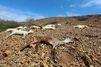 La sécheresse meurtrière est en Somalie