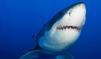 Un Néo-Zélandais meurt, attaqué par un grand requin blanc