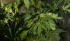 315 kg de cannabis saisis dans un véhicule