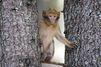 Euthanasies dans les Landes : les macaques portaient un virus contaminateur