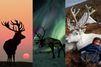 12 rennes mystérieux repérés sur Pinterest