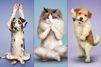 Le yoga des chiens et chats