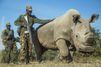 Sudan, un rhinocéros sous haute protection