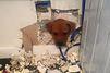 Trop curieuse, la chienne reste coincée dans le mur