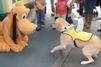 La drôle de rencontre entre Pluto et un chien-guide