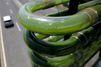 Ces algues captent le CO2 des voitures