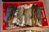 Gigantesque saisie de morceaux d'animaux aux Pays-Bas