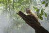 """Amazonia"": la critique"