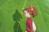 Les héritiers de Hayao Miyazaki